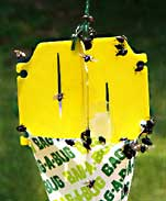 Bag-a-bug Japanese Beetle Trap