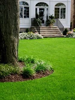 Grass Types By Seasonal Zones