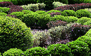 shrubs for the landscape